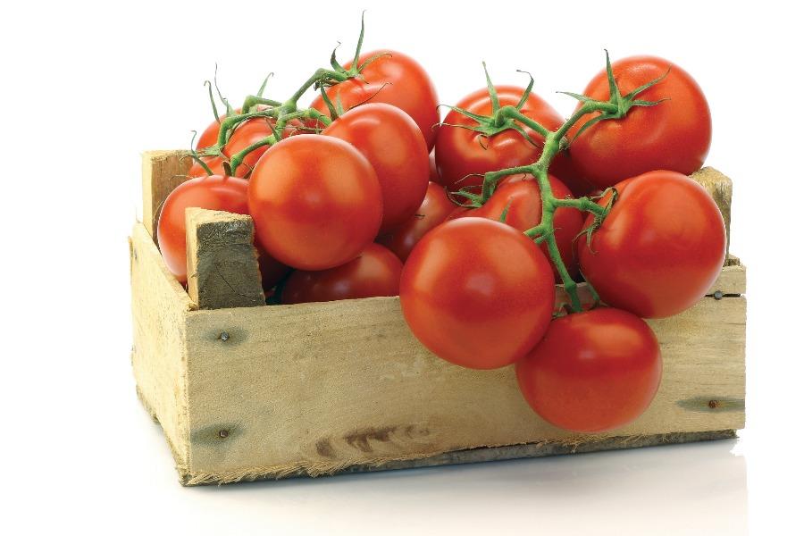 Tomat Untuk Program Diet